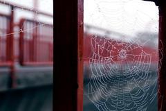 Di vernice e di ponti (meghimeg) Tags: 2015 cairomontenotte ponte bridge pioggia rain acqua water ragnatela tela web ragno spider arancione orange teladiragno