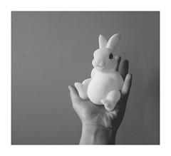 "I've only caught a white rabbit... :) - ""In your hands"" - for CTT - 7DWF (FMAG) Tags: inyourhands 7dwf rabbit ctt crazytuesdaytheme whiterabbit"