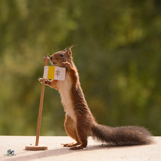 squirrel holding a Flag of Vatican City