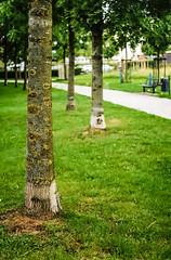 "Baum an Baum...-Tree on Tree (Siggi-Dee) Tags: ""leica elmar 50mm f28 35mm b26w blackandwhite color digital film japan kodak leica leicam6 leicam9 leicamp m9 tokyo voigtlander street rangefinder leicam5 wetzlar solms"