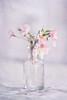 Blossom (borealnz) Tags: blossom flowers cherry sakura jar bottle petals pink soft flypapertextures
