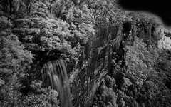 Fitzroy Falls (Bass Photography) Tags: fitzroyfalls mortonnationalpark blackwhite infrared cliff nature nationalpark nswnationalparks water waterfall gumtrees australia newsouthwales nsw wollongong macquariespass