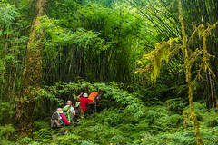Gocha-la trek in Sikkim, India (David Ducoin) Tags: asia dzongri gochala group hike hiking himalaya india kangchenjunga mountain nationalpark sikkim trek treking trekking walking gangtok in