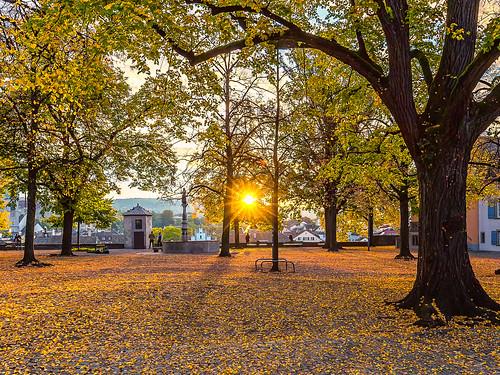 Lindenhof autumnal sunrise
