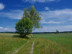 a field (Darek Drapala) Tags: field sky blue skyskape nature trees green botanic lumix light panasonic poland polska panasonicg5 smoldzino