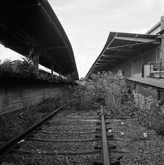 The old railway yard (rotabaga) Tags: sverige sweden svartvitt värnamo blackandwhite bw bwfp lomo lomography lubitel166 twinlens mediumformat mellanformat 120 6x6