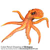 Octopus with Color Pencils [Time Lapse] (drawingtutorials101.com) Tags: octopus animals sea water sketch sketches sketching sketchs draw drawing drawings color colors coloring pencil how timelapse video