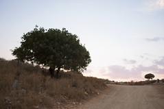 Ksamil, Albania (Tokil) Tags: ksamil albania southalbania balkans east trip travel colors mediterranean summer nature sunset road trees shqipëri shqipëria landscape sunlight nikond90