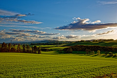 The rolling hills of Angus. (alan.irons) Tags: rolling hills landscape bluesky fields farming aylth blairgowrie angus valley scenery calm evening clouds puffy scotland craigtonofairlie canon5dmkiii