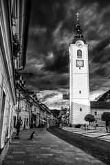 Une vie de chien (bertranddorel) Tags: église clocher kamnik slovénie noiretblanc blackandwhite nb bw wb rue street streetphoto photoderue chien