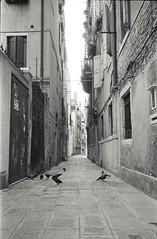 img003 (Yu,Tsai) Tags: leica m2 leicam2 film kodaktrix400 iso400 gtx970 bw モノクロ italy italia venizia イタリア 法國學料理那十個月 leitz summilux114352st 35mm