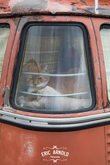 Corner Window Cat - EXPLORED (Eric Arnold Photography) Tags: vw volkswagen bus kombi transporter bulli van cat feline 2017 window corner split splitty pet