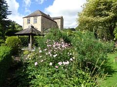 Stanton Hall gardens (Kniphofia) Tags: stantonhall northumberland garden plants nursery goodvalue morpeth anemone