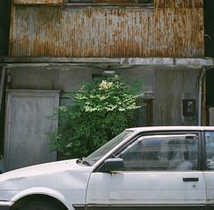 寿町のプロローグ 01 (Hisa Foto) Tags: film alley yokohama planar rollei tlr rolleiflex