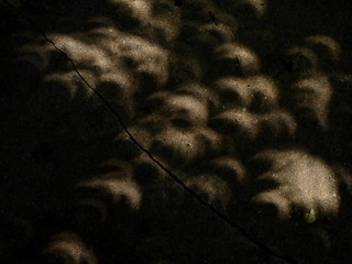 Solar eclipse via leaves