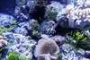 001096-P2188389 (aussiephil1960) Tags: em12 em1markii sydneyaquarium fish olympuszd1260mmf2840