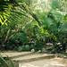 Walking through a tropical Jungle