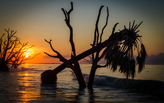 The Last Tango (carolina_sky) Tags: edistoisland hurricaneirma hurricanematthew boneyard trees dancing sunrise beach charleston southcarolina palmetto oak waves atlantic ocean pentaxk1 pentax2470mm
