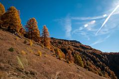 lodze4 (rohbenj) Tags: select mélèze automne valais derborence