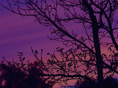Sunset 20150815 (caligula1995) Tags: 2015 plumtree sisters smoke sunset