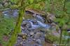 Horse Tail Falls Creek (jimgspokane) Tags: horsetailfalls waterfalls creeks oregonstate otw