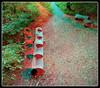 Longwood Gardens Walk 6 - Anaglyph 3D (DarkOnus) Tags: pennsylvania bucks county panasonic lumix dmcfz35 3d stereogram stereography stereo darkonus longwood gardens scenic scenery trail path hyper hyperstereo bench treehouse birdhouse anaglyph