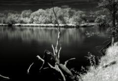 Ir (MarcelXYZ) Tags: marcelxyz cesarz drohiczyn infrared ir river landscape