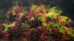 Helechos / Ferns (Dominic Dähncke) Tags: helechos d70s dodafoto dominic dähncke naturaleza nature fern colores colors 1635 1635vr ferns mothernature mood ambiente plants nikon
