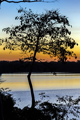 Lake Sandoval Sunset (_aires_) Tags: aires iris lake sunset silhouttes tree sky lakesandoval lagosandoval canoneos5dmarkiii canonef70300mmf456isusm madrededios madredediósperú tambopatanationalreserve reservanacionaldetambopata
