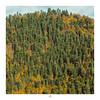 ETR PHOTOGRAPHY  ERSİN TÜRK - ETR0115 (ETR | Ersin Türk) Tags: yedigöller bolu abant dağlar mount ağaç tree color green yellow orman forest ersintürk ersintürkfotoğraf etrfotograf etr manzara landscape doğa natural kare