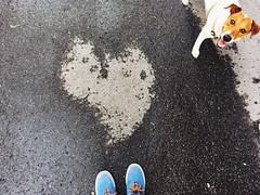 heppiheppi (Babszi) Tags: jackrussell jrt terrierlife jackrussellterrier dry shaped heart coeur szív concrete budapest beton hungary mik ikozosseg heartisallaround magic dog 6feet magyarország 6ker hatker terézváros belváros downtown streetdog street brown white shoes blue pet happydog happylife terriermoments terrier