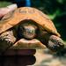 Baby+Turtle