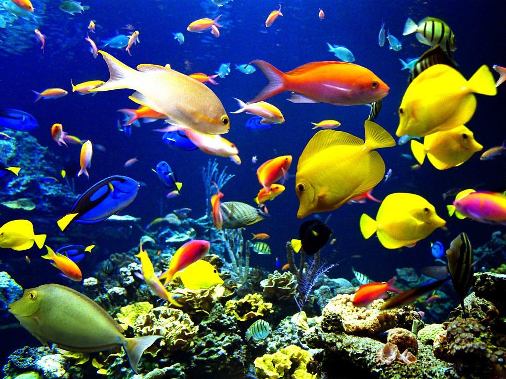 gambar wallpaper pemandangan bawah laut riche chik tags pemandanganindah