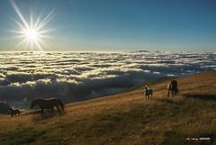 SER libre (Jabi Artaraz) Tags: jabiartaraz jartaraz zb euskoflickr libre libertad amanecer sol sun niebla bruma yegua potro horses verano sunrise aire oxígeno