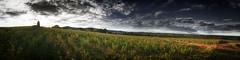 Vignes de Romanèche-Thorins (Jerome Mercier) Tags: vigne vin romanèchethorins beaujolais sunlight coucher de soleil lumière paysage landscape couleurs