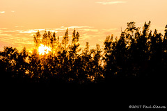 A Blaze Of Sunset In The Treetops (Glotzsee) Tags: nature florida indianrivercounty verobeach outdoors outside marinelife indianriverlagoon indianriver glotzsee glotzseefloridaimages sunset scenery scenic