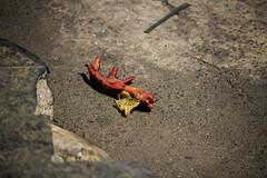 Av Wilson Alvarenga - Monlevade - Wir Caetano - 21 09 2017 (1) (Wir Caetano / Dabliê Texto Imagem) Tags: pé de galinha frango lixo
