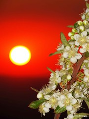 flowery sunset (bettolves) Tags: sunset flores barrosomg beto sonyhx300 flickr