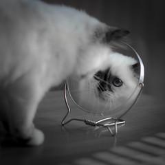 mirrormirror (Uniquva) Tags: mirrormirror flickrfriday