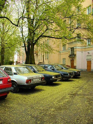 cars_under_trees ©  serge.zykov