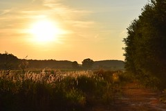 summer moods (JoannaRB2009) Tags: summer mood light sun sunlight sunlit landscape view nature natural sunny water pond plants reed path shrubs zgniłebłoto łódzkie lodzkie polska poland sunset