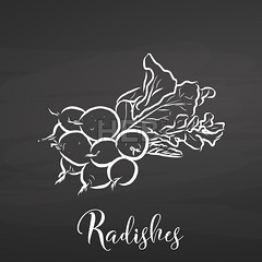 Radishes drawn on Blackboard. (Hebstreits) Tags: art background black board chalk chalkboard color concept cute dark design drawing food fresh graphic green health healthy icon illustration isolated natural nature object organic outline pen plant radish sketch style symbol top vector vegan vegetable vegetarian view white
