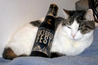 Beer cat -[ Happy Caturday ]-