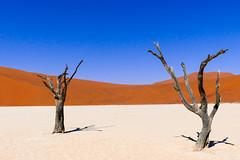 P1020942 (Seb_Jan) Tags: namibie namibia afrique africa afrika summer 2017 road trip roadtrip travel adventure holiday nature explore lumix wildlife safari picoftheday photooftheday dune desert naukluft sossusvlei red sand wonder merveille sesriem deadvlei dead vlei