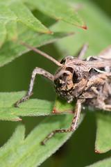 Heemtuin (Anieteke) Tags: heemtuin vlaardingen natuur nature macro fauna insect