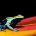 Dyeing poison arrow frog