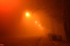 summer moods (JoannaRB2009) Tags: fog mist park path alley avenue light lights tree trees night milicz lowersilesia dolnyśląsk polska poland longexposure dolinabaryczy orange