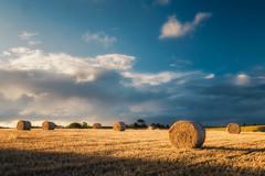 Hay Bales (Timothy Gilbert) Tags: panasonic1235mmf28x sunset landrake haybales panasonic crops gx8 hay cornwall