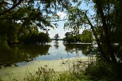 Lafayette 2 (Krasivaya Liza) Tags: lafayette la louisiana bayou bayous swamp swampland swamptour south southern usa nature