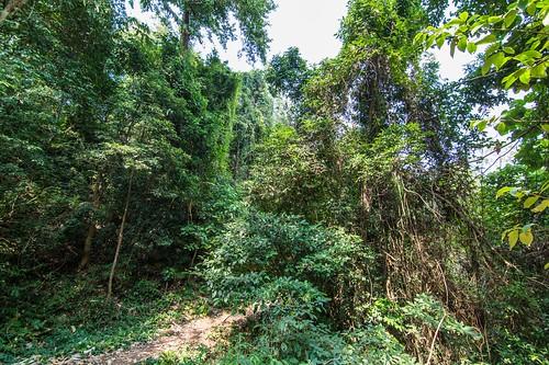 ramkhamhaeng national park - thailande 14